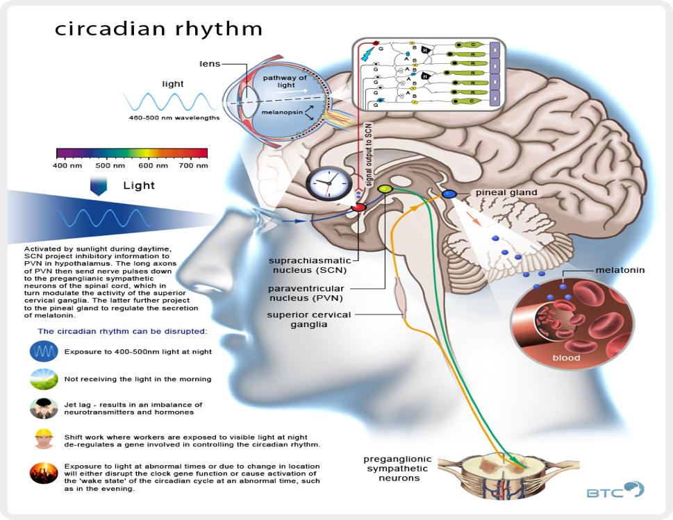 Circadian Rhythm1
