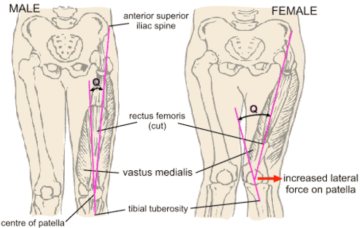 female-anatomy